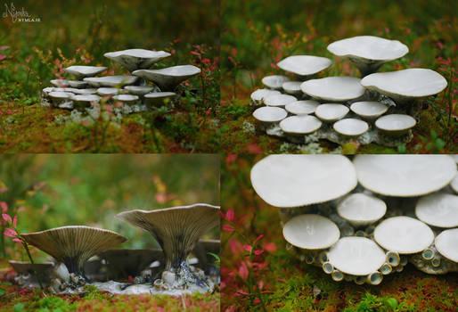Fungi Palette 3