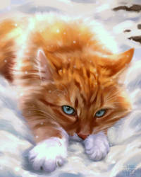 Flametail Fanart from Warriors Cats