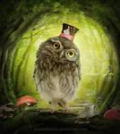 Wacky owl