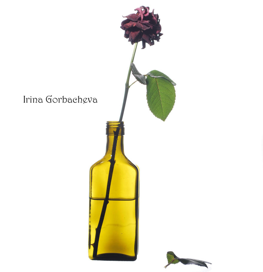 rose in a bottle by Irina-Gorbacheva