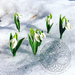Polymerclay SNOWDROPS
