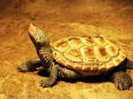 Turtle Pose by hippiechick6979