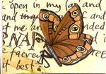 ATC Butterfly Eyes