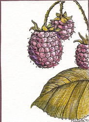 ATC Fruit Raspberry by claudiamm37