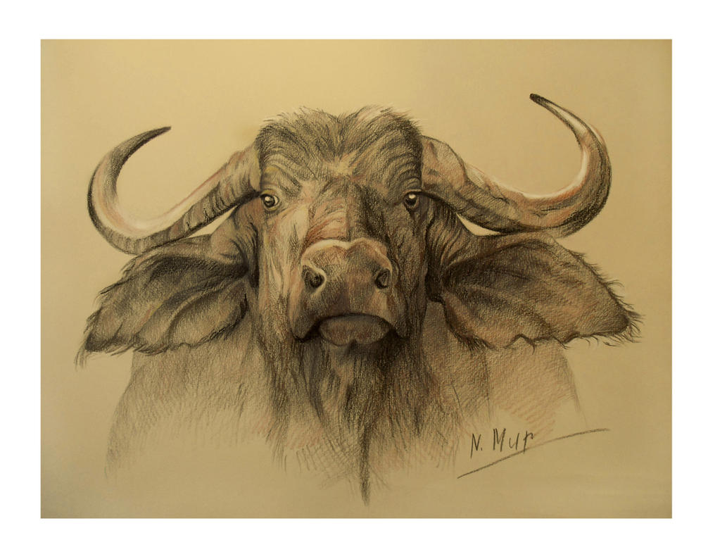 buffalo head by natamur on deviantart. Black Bedroom Furniture Sets. Home Design Ideas
