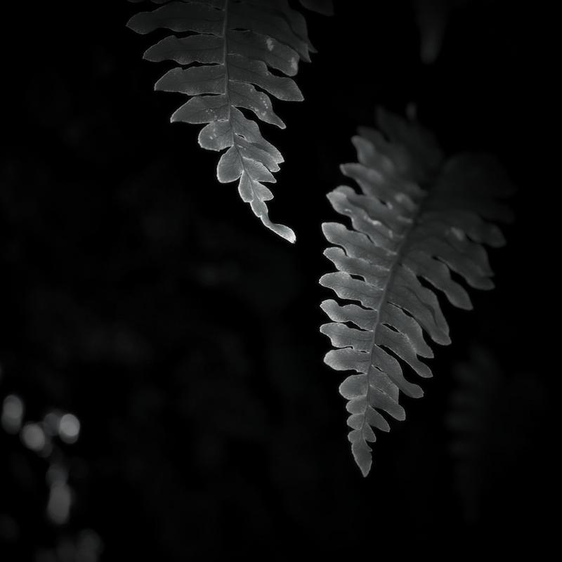 Au pays des ombres 3 by Douce-Amertume