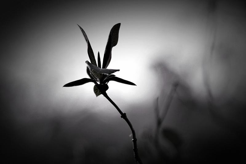 Au pays des ombres 4 by Douce-Amertume
