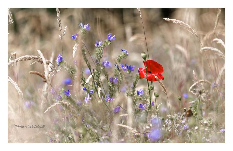 Vivement le printemps 5 by Douce-Amertume
