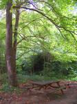 Bir orman yagmurunda...