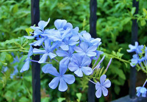 Baharlarim mavi... - M. Erbulan by fiyonk14