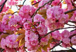ilkbahar oldum bugun... by fiyonk14