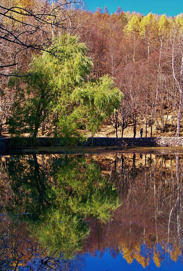 Ormanlarin en kuytusunu... by fiyonk14