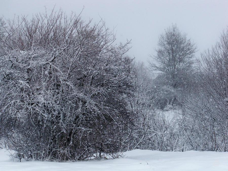 Dallarina karlar yagiyor... by fiyonk14