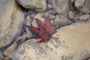 Bir yaprak... by fiyonk14