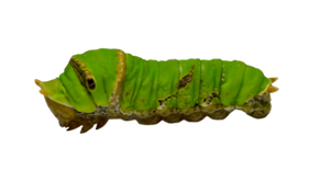 Caterpillar stock