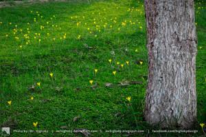 Yellow little flowers