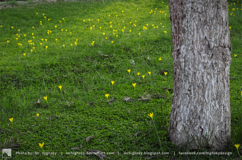 Yellow little flowers by MrHighsky