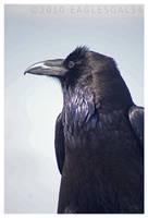 Raven Profile by eaglesgal54