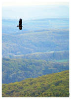Soaring by eaglesgal54