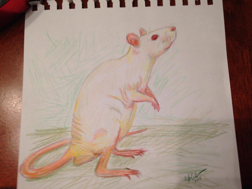 Hairless Rat by nezuko