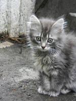 kitty by Shaporeva
