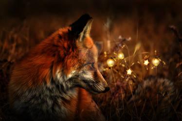 Fox Light