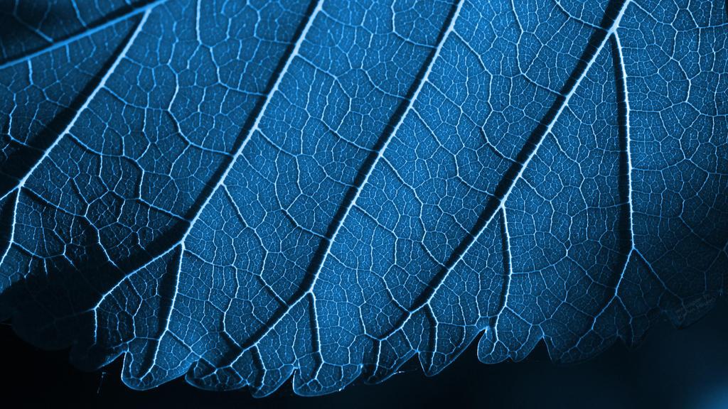 on leaf blue - photo #16