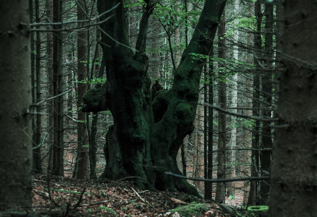 Outcast by erynlasgalenphotoart