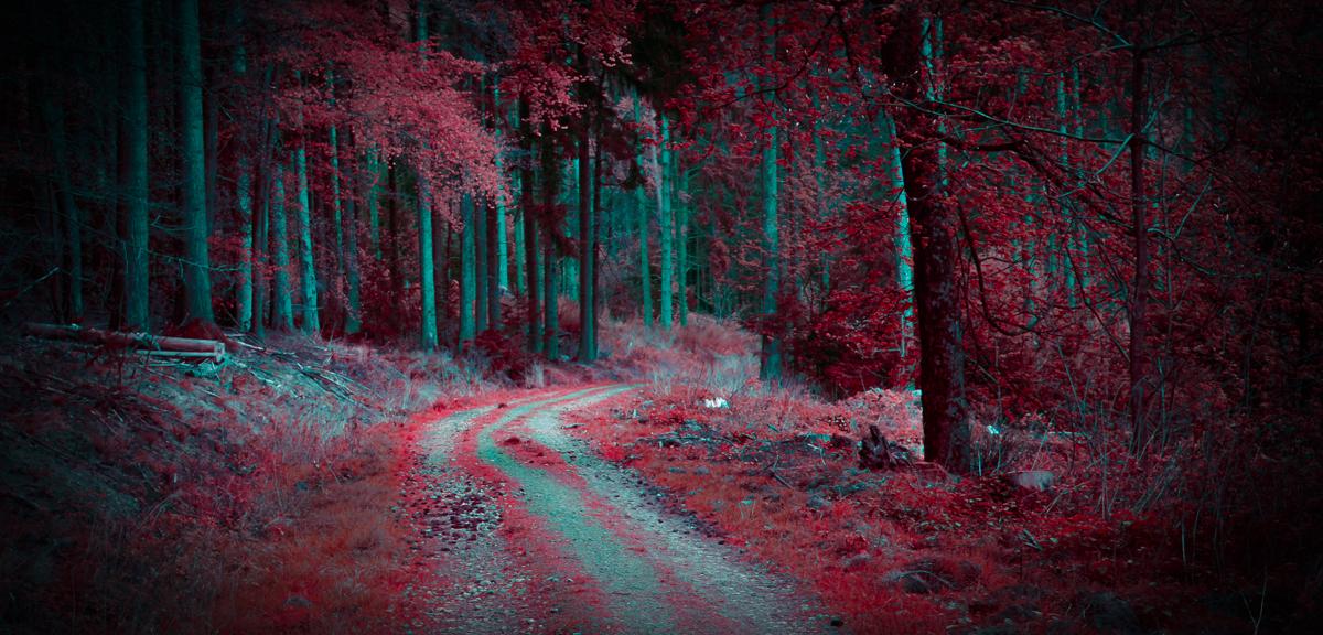 A madman's dream by erynlasgalenphotoart