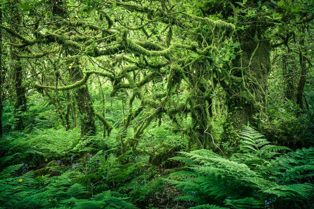 Deep Forest by erynlasgalenphotoart