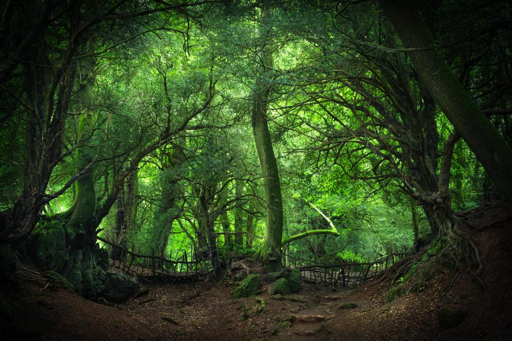 Enter Mirkwood by erynlasgalenphotoart