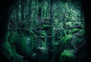 Home of the Wood Elves by aw-landscapes