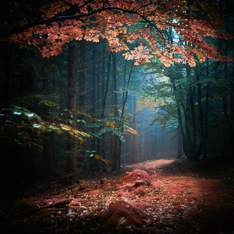 Path of Dreams by erynlasgalenphotoart