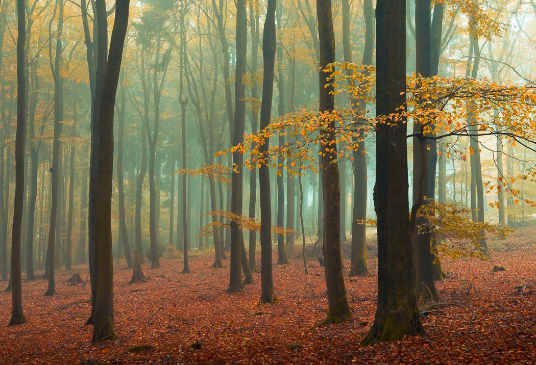 Golden Brown by erynlasgalenphotoart