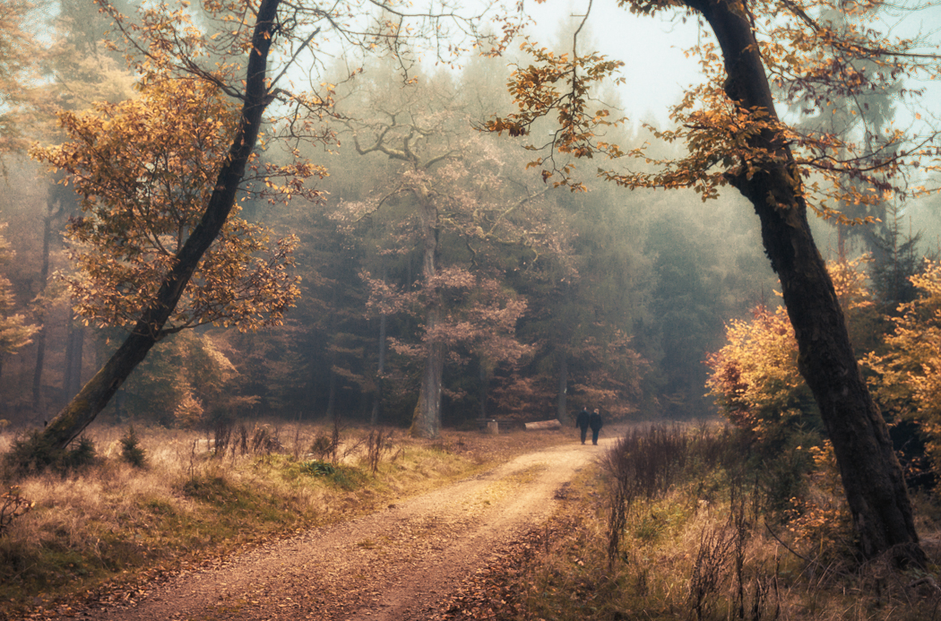 Autumn Dream by erynlasgalenphotoart