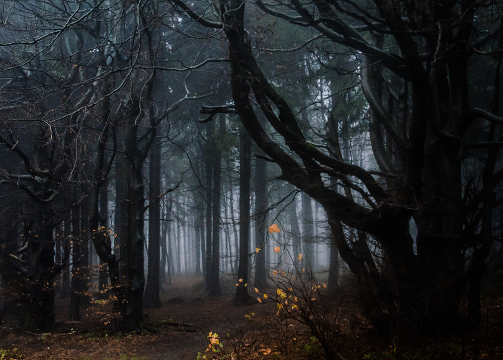 Deep wood by erynlasgalenphotoart