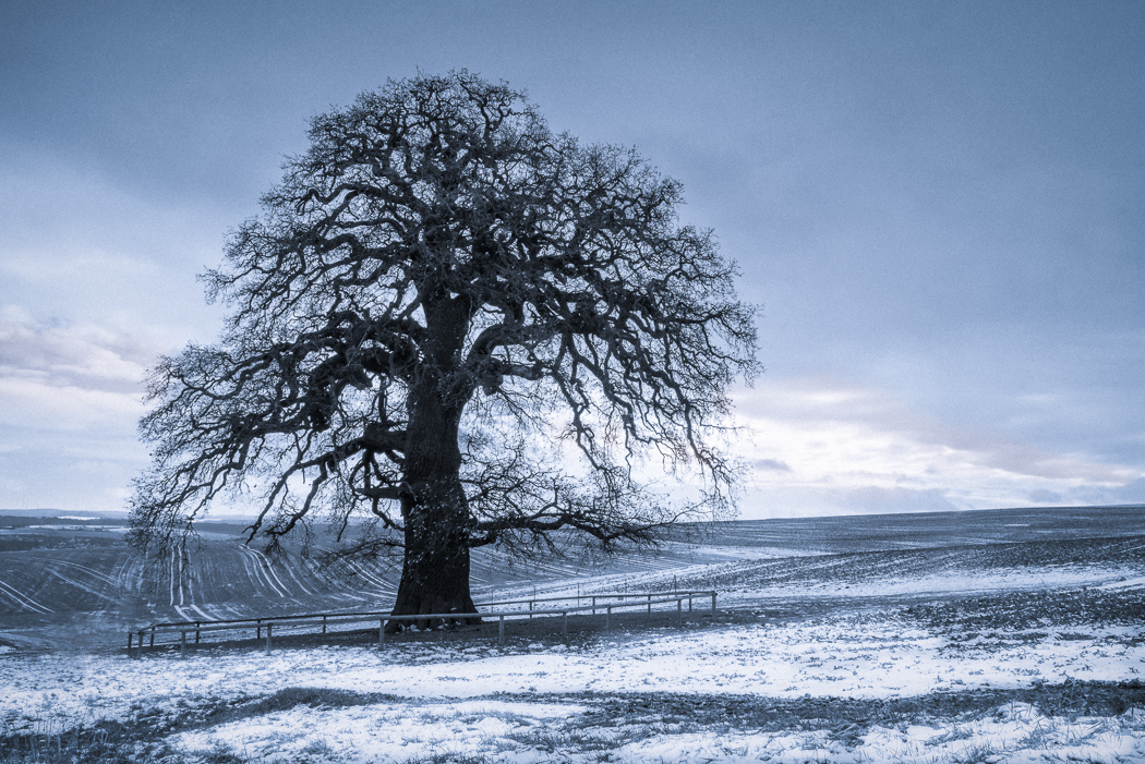 The oldest around by aw-landscapes