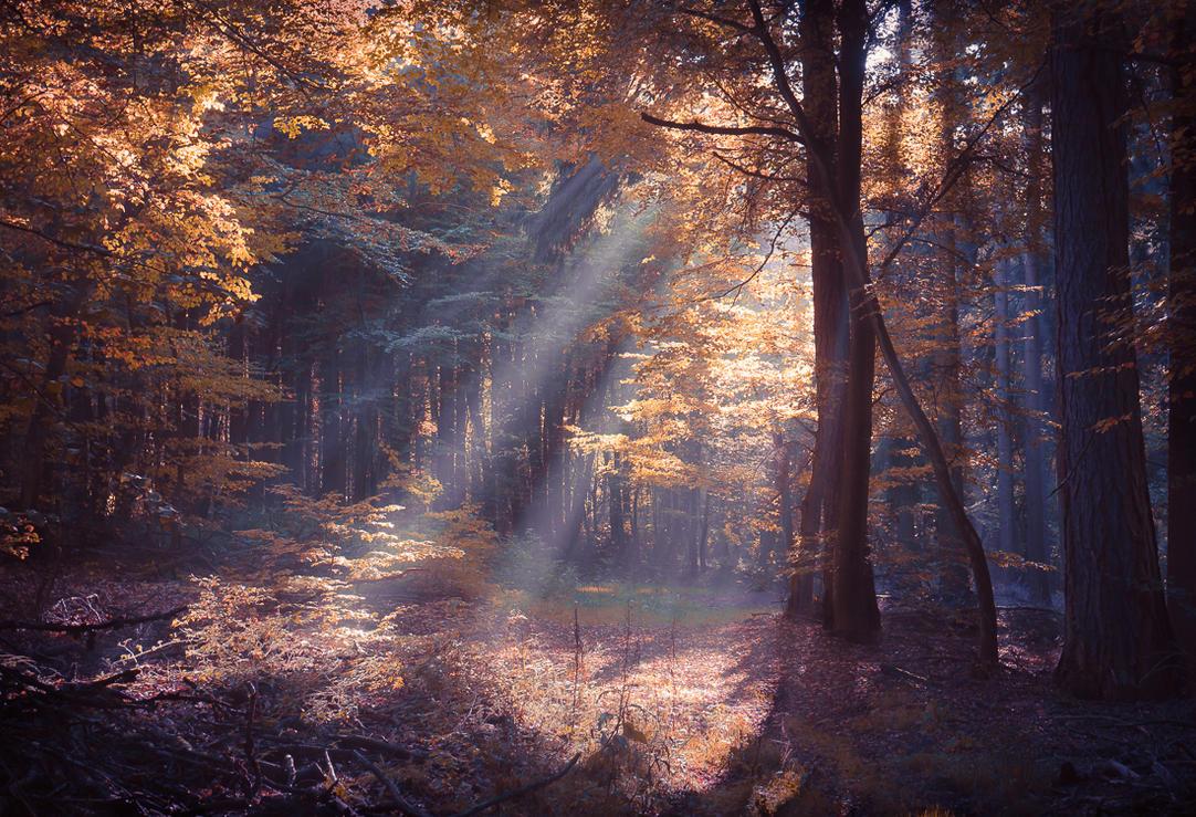 Zauberwald by erynlasgalenphotoart
