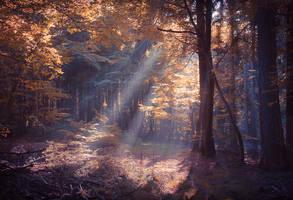 Zauberwald by aw-landscapes
