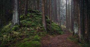 Forest mound