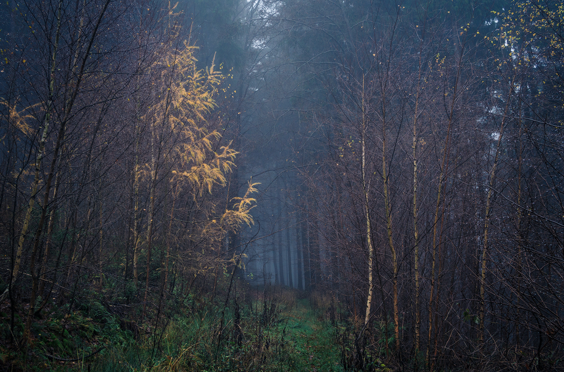 Magic light by erynlasgalenphotoart