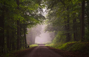 Foggy summer by aw-landscapes