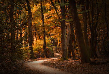 Dreaming of Autumn by aw-landscapes