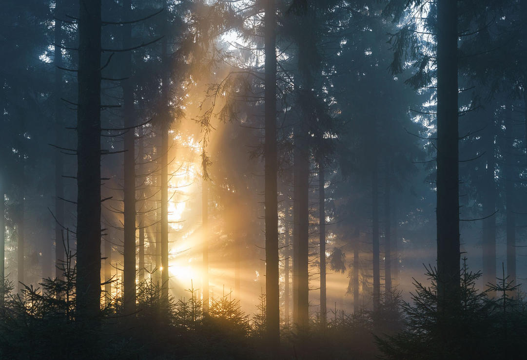 Forest Burst by aw-landscapes