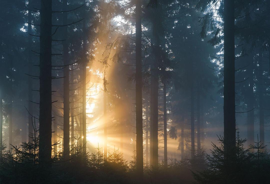 Forest Burst by erynlasgalenphotoart