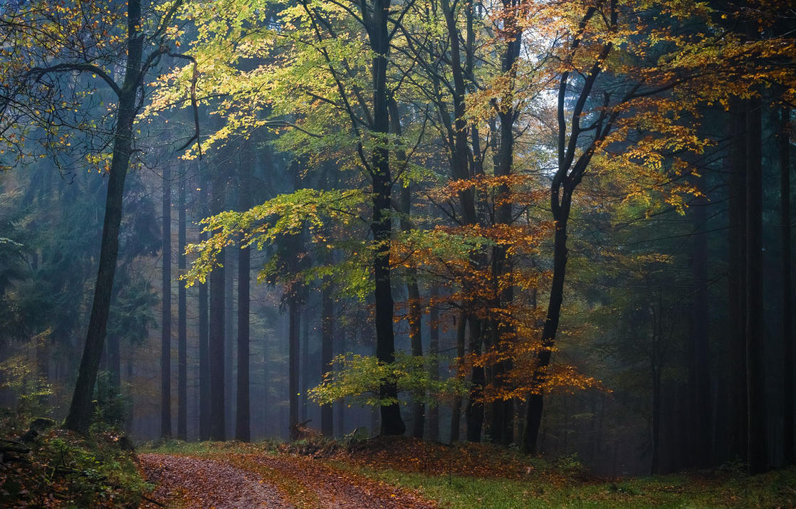 Treasure of the Forest by aw-landscapes