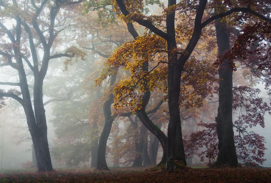 Autumn Wonderland by aw-landscapes