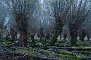 Entmoot by aw-landscapes