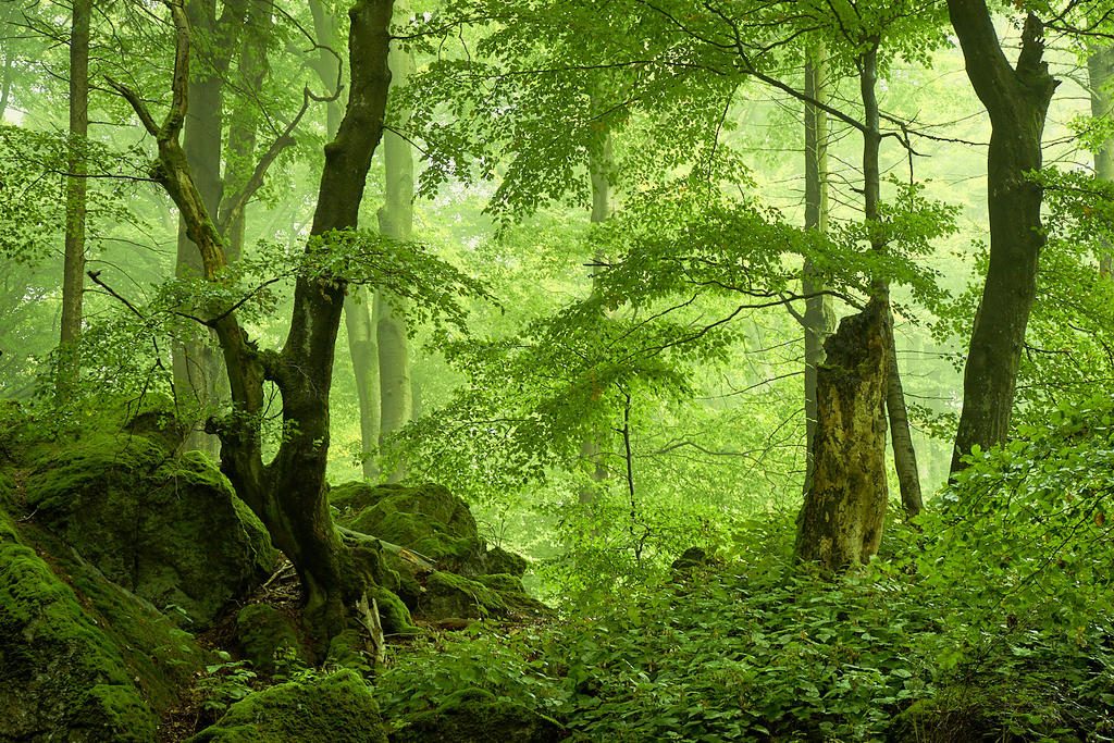 Volcanic forest by aw-landscapes