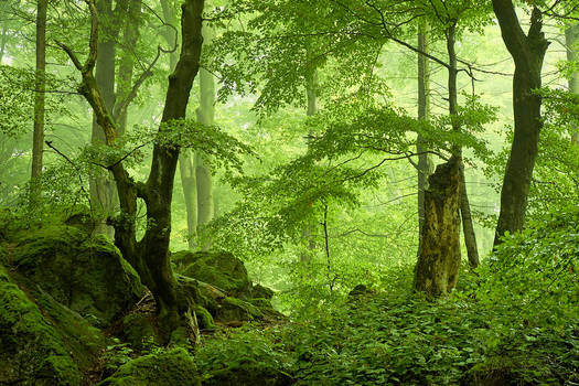 Volcanic forest